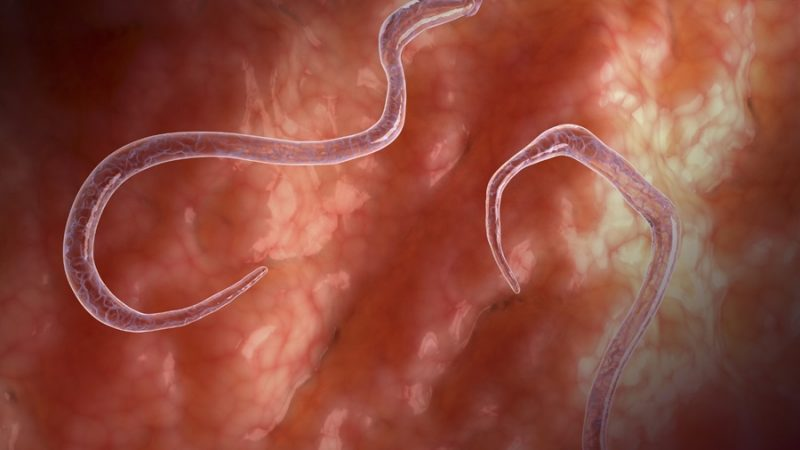 Piperazine citrate to cure worm infections